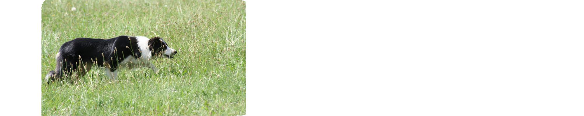 Slide-5_2000x400